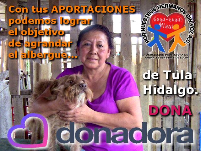 donadora 37 dias