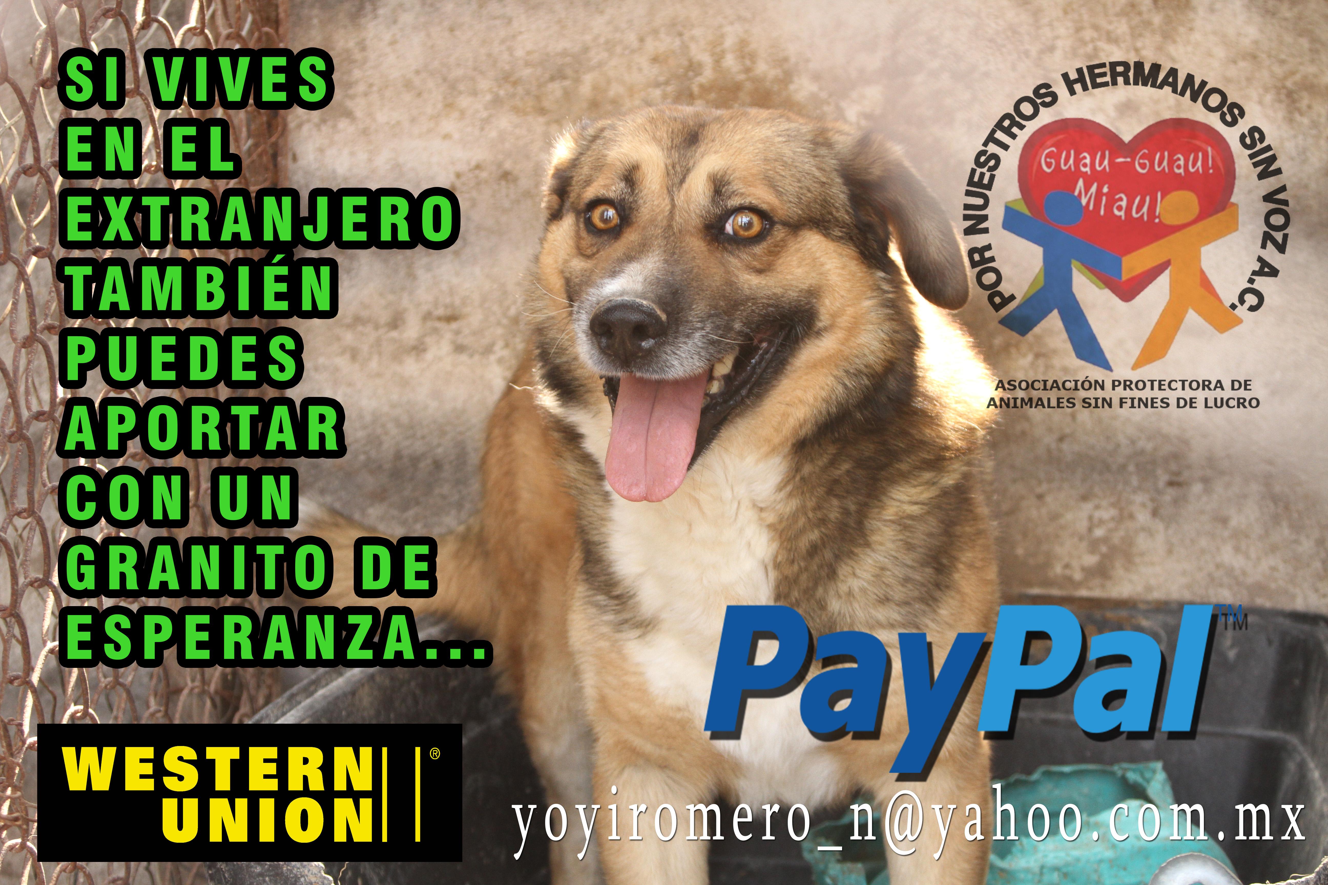 donativo extranjero